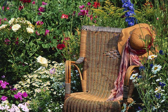 Kwiaty Ogrodowe Wieloletnie Kwitnące Byliny Zdobią Ogród
