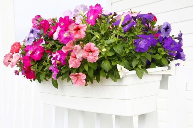 Kwiaty Balkonowe Jak Sadzic Kwiaty W Doniczkach Na Balkonie Praktyczne Rady Urzadzamy Pl