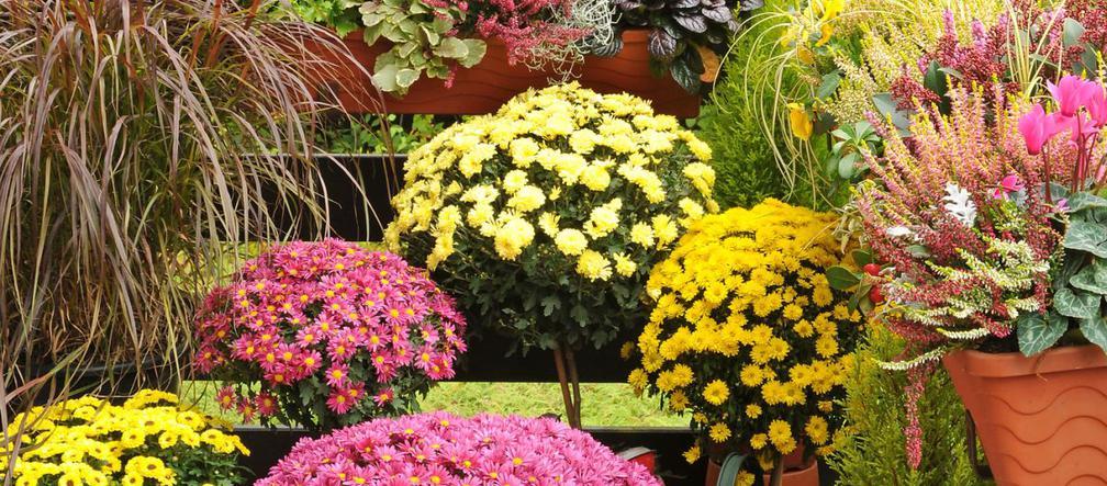 Jak Zabezpieczyc Kwiaty Balkonowe Przed Mrozem Zimowe Oslony Urzadzamy Pl