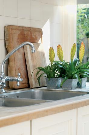 Rośliny Doniczkowe Które Sprawdzą Się W Kuchni Zobacz 9