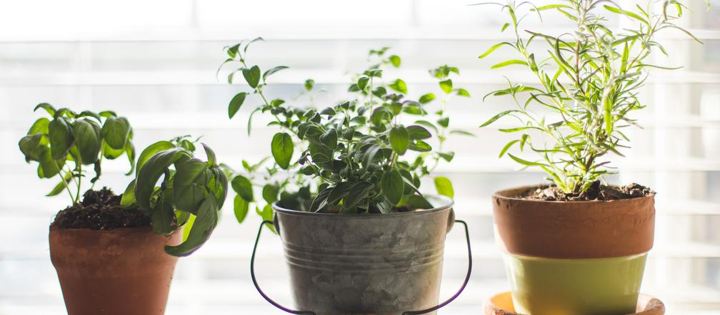Jak stworzyć ziołowy zakątek na balkonie lub w ogrodzie? - Inspiracje i porady