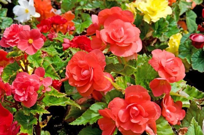 Roslin Na Balkon Polnocny Jakie Wybrac Kwiaty Balkonowe Urzadzamy Pl