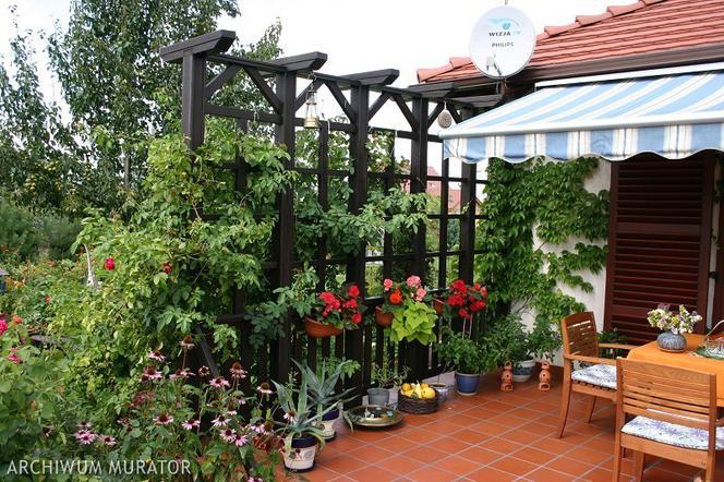 Taras Pełen Roślin Jak Urządzić Ogród Na Tarasie Muratorpl