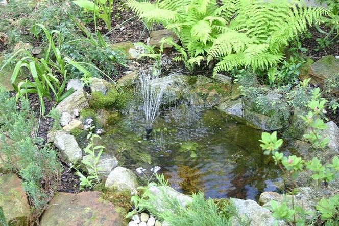 Wodne Elementy W Ogrodzie Oczko Wodne Kaskada Wodospad