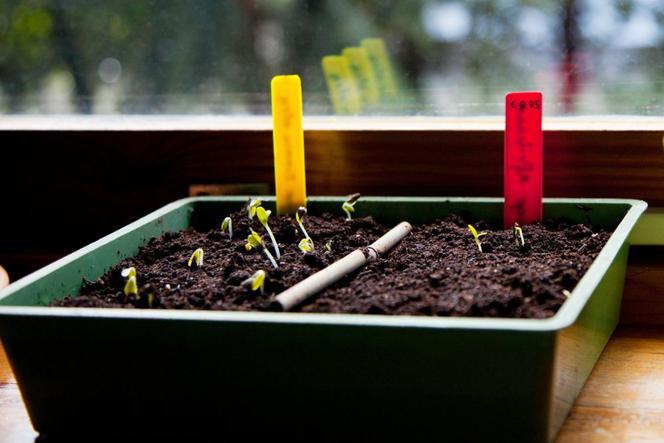 Wysiew Nasion Warzyw W Domu Do Czego Wysiewać Nasiona