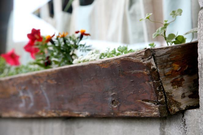 Jesień Na Balkonie Jak Zabezpieczyć Przed Zimą Rośliny W