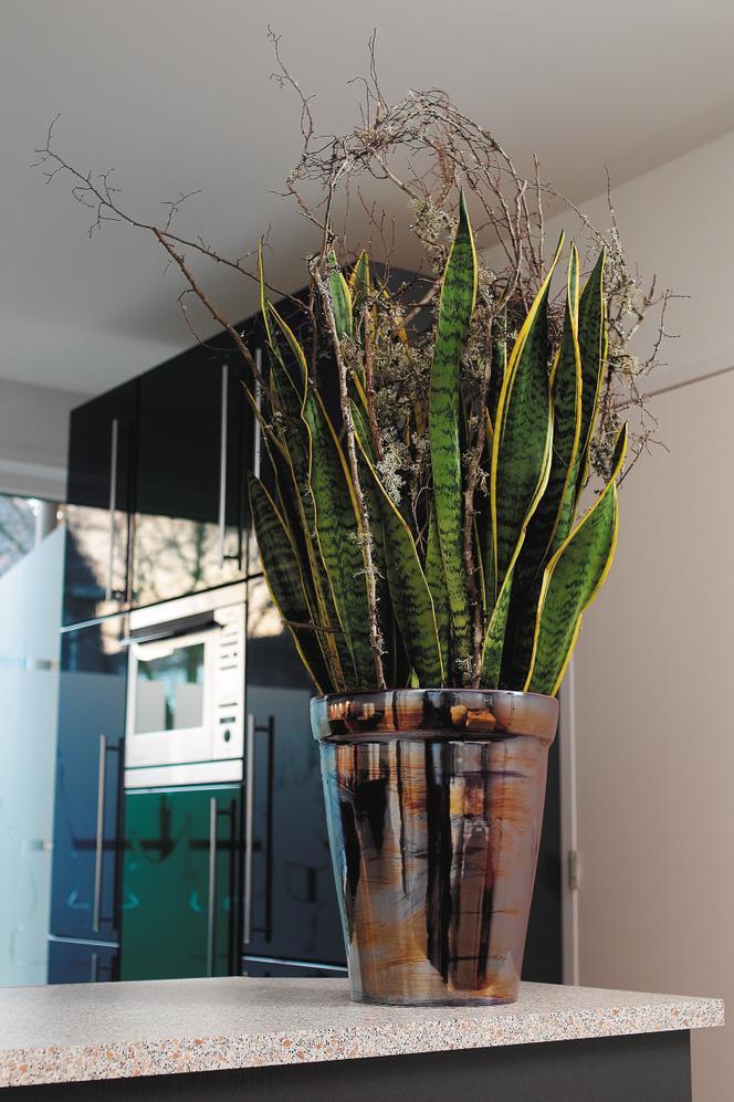 Rosliny Doniczkowe Ktore Sprawdza Sie W Kuchni Zobacz 9 Propozycji Kwiatow Doniczkowych Atrakcyjnych Przez Caly Rok Murator Pl