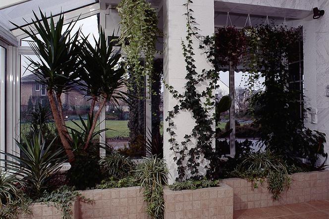 Jakie Rośliny Posadzić W Ogrodzie Zimowym Muratorpl