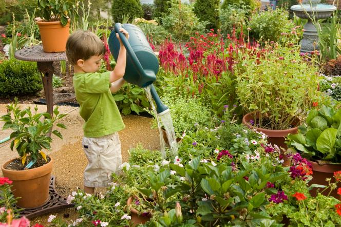 Jak Urządzić Bezpieczny Ogród Dla Dzieci Muratorpl