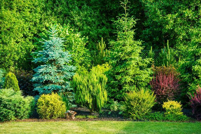 Drzewa I Krzewy Do Ogrodu Jakie Wybrać Drzewa I Krzewy