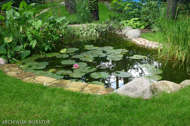 Topnotch Projekt i budowa oczka wodnego. Zobacz, jak zrobić w ogrodzie OP78