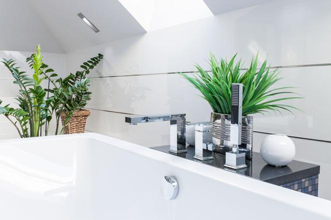 Kwiaty Doniczkowe Do łazienki Jakie Rośliny Doniczkowe