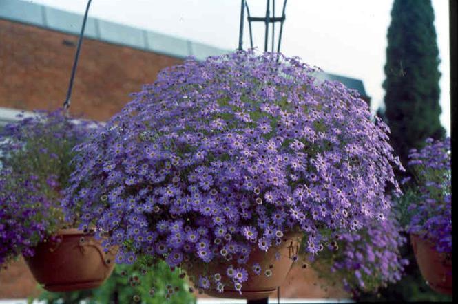 Balkon W Kwiatach Polecane Kwitnące Rośliny Na Balkon