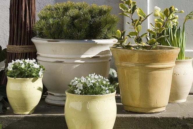 Rośliny Balkonowe W Ozdobnych Donicach Pomysł Na Aranżację