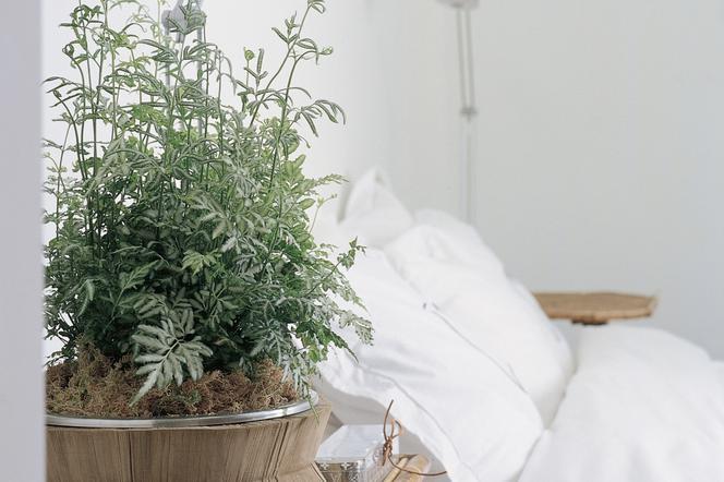 Rośliny Doniczkowe Do Sypialni Oczyszczające I Nawilżające
