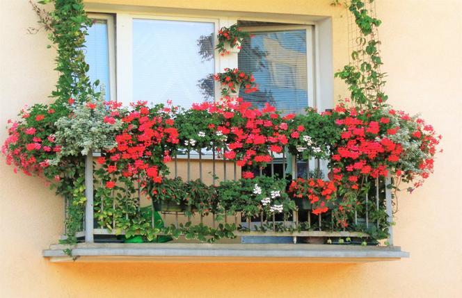 Gorzow Kwiaty Dekoracje Ozdoby Wystartowaly Konkursy Na Najladniejszy Balkon I Ogrod Gorzow Super Express