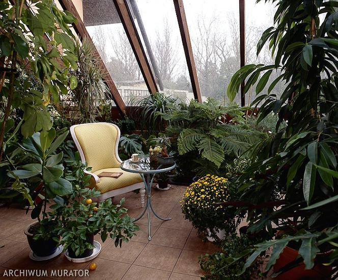 Problemy Z Roślinami W Ogrodzie Zimowym Choroby I Szkodniki Oraz