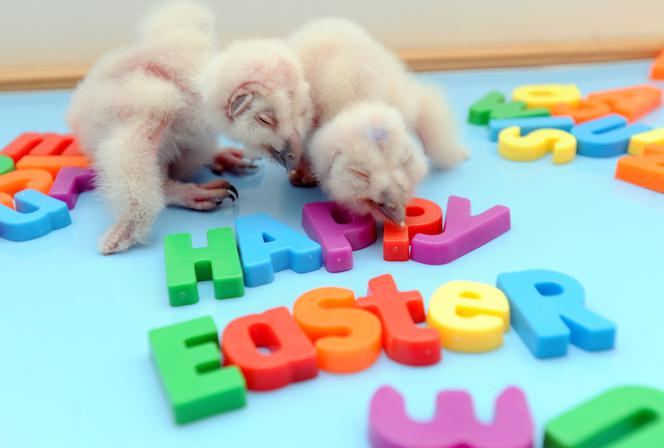 życzenia Wielkanocne Sms Y Wierszyki Krótkie śmieszne