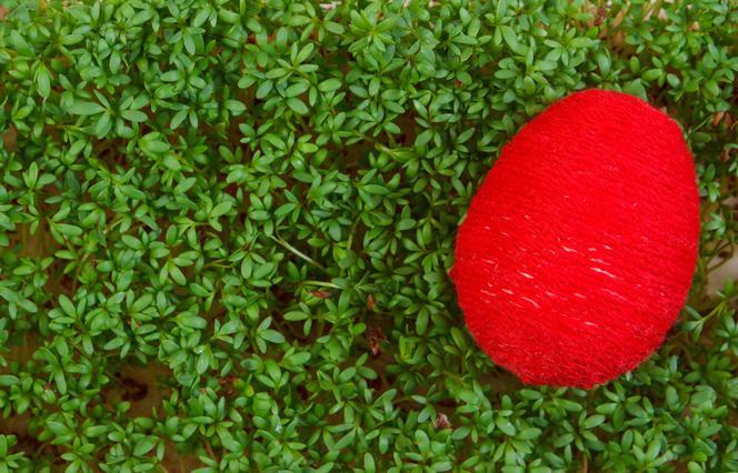Rzeżucha Na Wielkanoc Pomysły Na Dekoracje 5 Propozycji