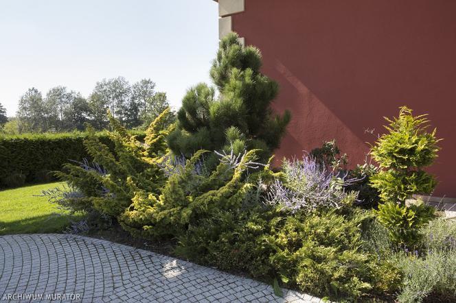 Jak Urządzić Ogród Przed Domem Pomysł I Aranżacje Ogródka