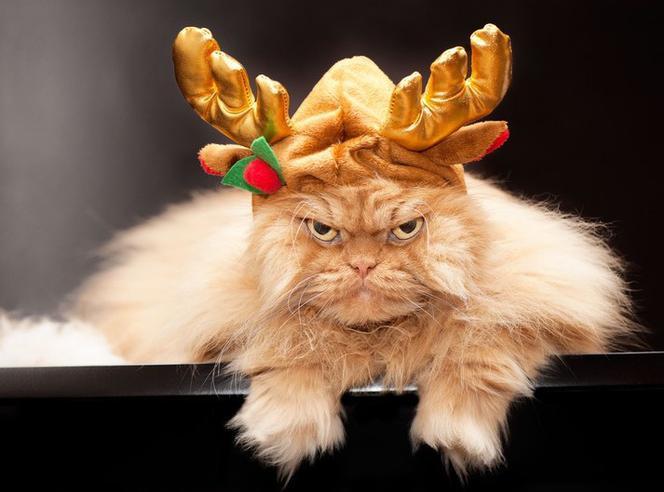 śmieszne fotki świąteczne