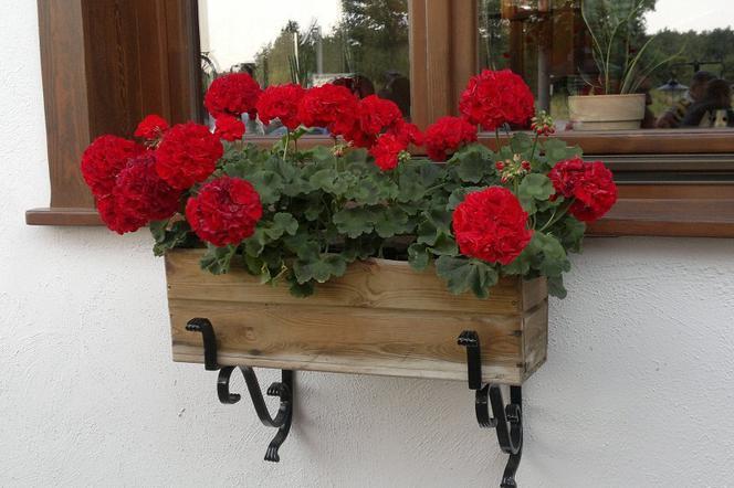 Kwiaty Balkonowe Top 10 Kwiaty Do Skrzynek Balkonowych