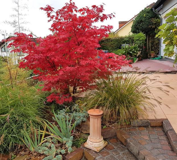 Ogromny Klon w ogrodzie: uprawa i najładniejsze gatunki. Wybieramy drzewa XN75