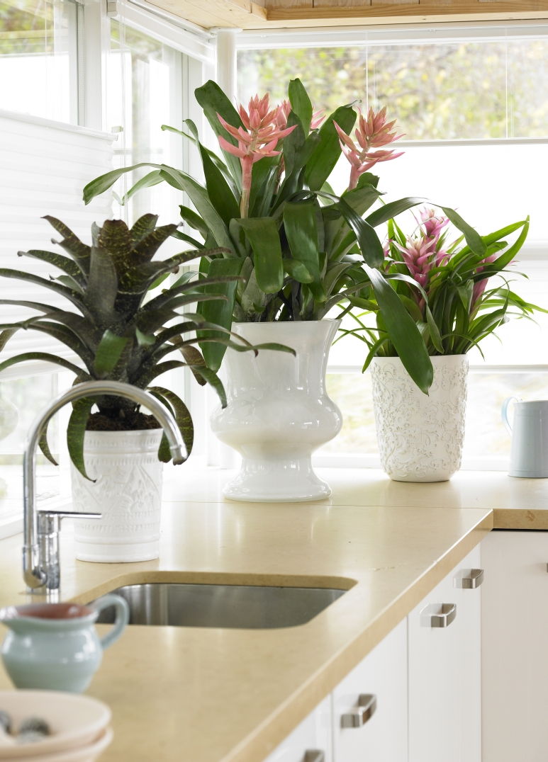 Rośliny Doniczkowe 7 Zasad Jak Aranżować Rośliny Doniczkowe W