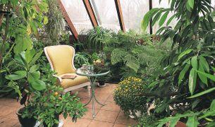 Pielęgnacja Roślin W Ogrodzie Zimowym Jak Warunki Zapewnić Roślinom