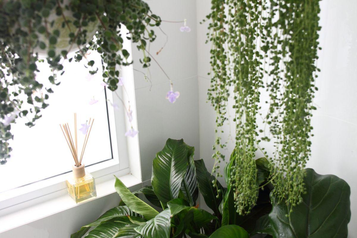 Kwiaty Doniczkowe W łazience Aby Je Tam Uprawiać