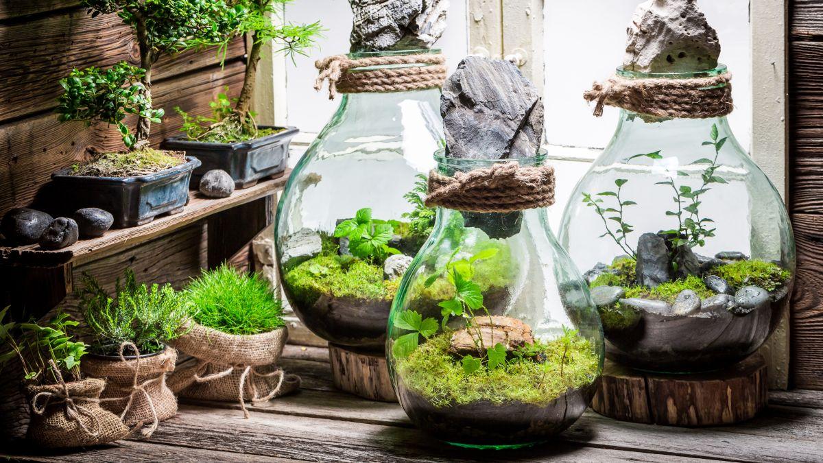 Szklane Ogródki Modna Roślinna Dekoracja W Domu Muratorpl